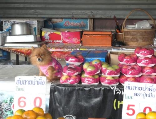 Vandring i Chiang Mai | Kjøpesenter