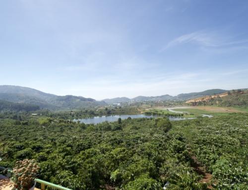 En tour til en ordentlig kaffeplantasje i Da Lat!