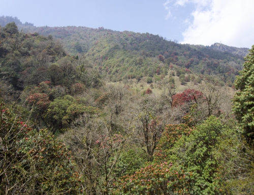 Annapurna Base Camp Trek Dag 2: Ulleri til Ghorepani